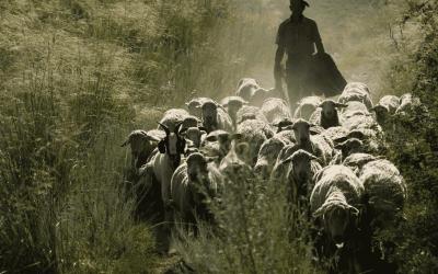 Diputación abre el plazo para subsanar las solicitudes de las subvenciones de apoyo al sector agrícola y ganadero