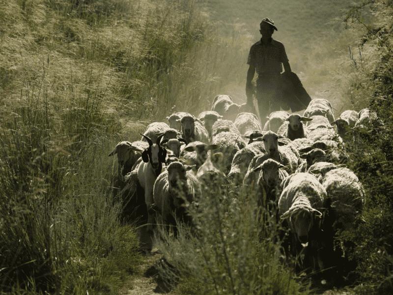 COAG pide la exención para los ganaderos del pago del canon de montes públicos