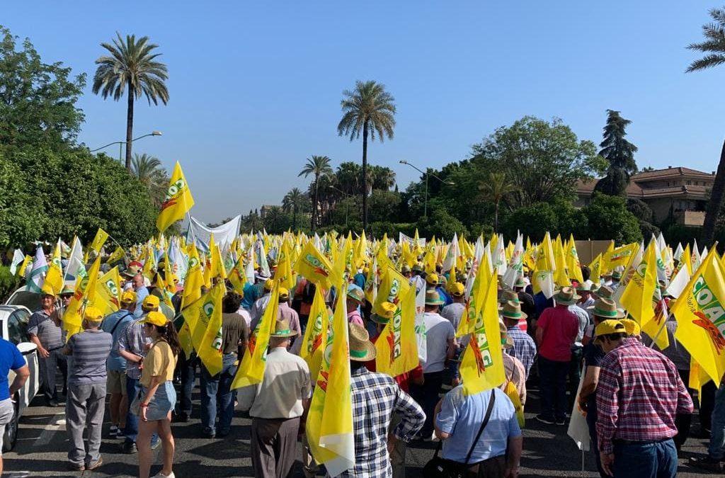 Manifestación en Madrid el 10 de octubre en defensa del olivar tradicional