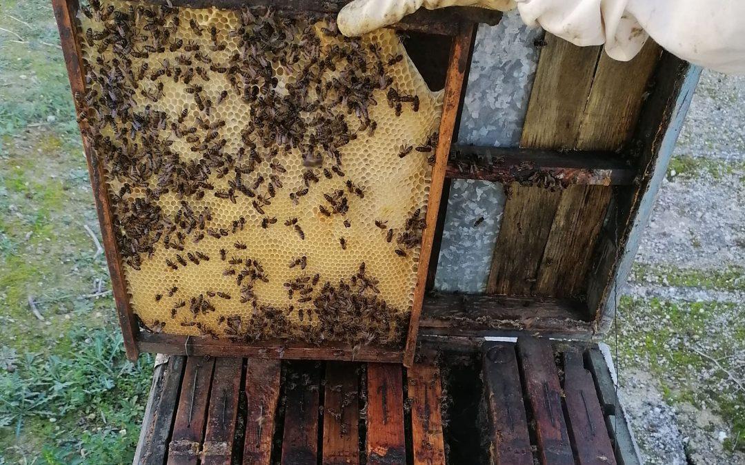 La Junta adapta normativa para que los apicultores soliciten ayudas de forma telemática