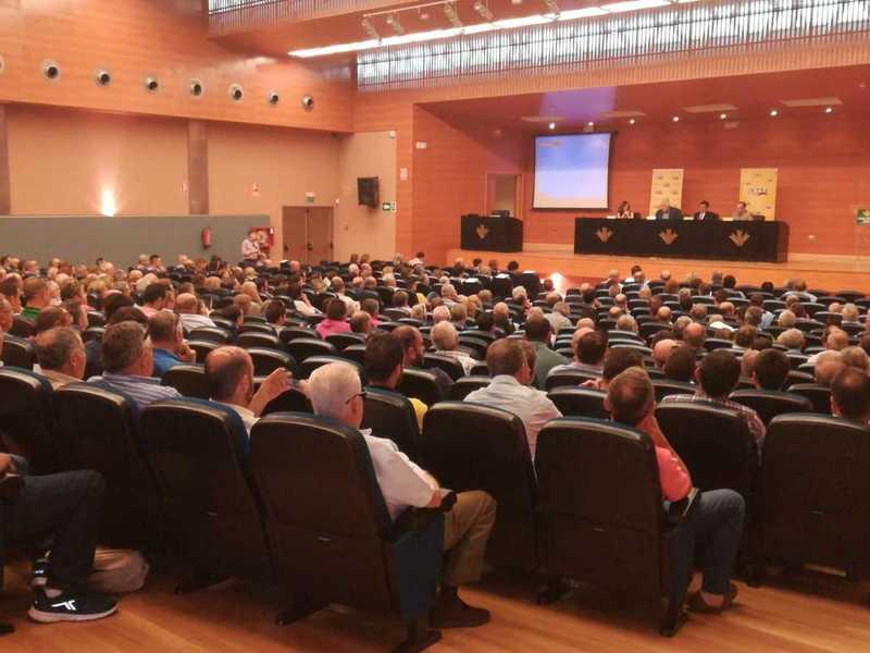 Olivareros de toda España analizan estrategias frente a la crisis de precios