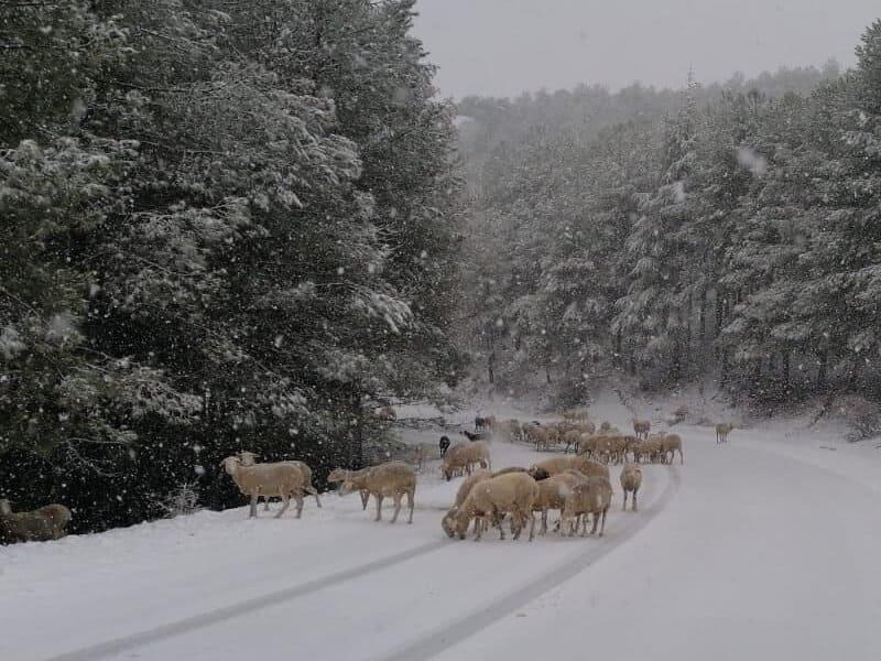 COAG agradece los cambios que permiten desbloquear superficie en la Sierra de Segura para ganaderos