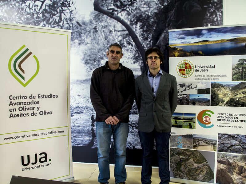 Un proyecto para mejorar la sostenibilidad del olivar