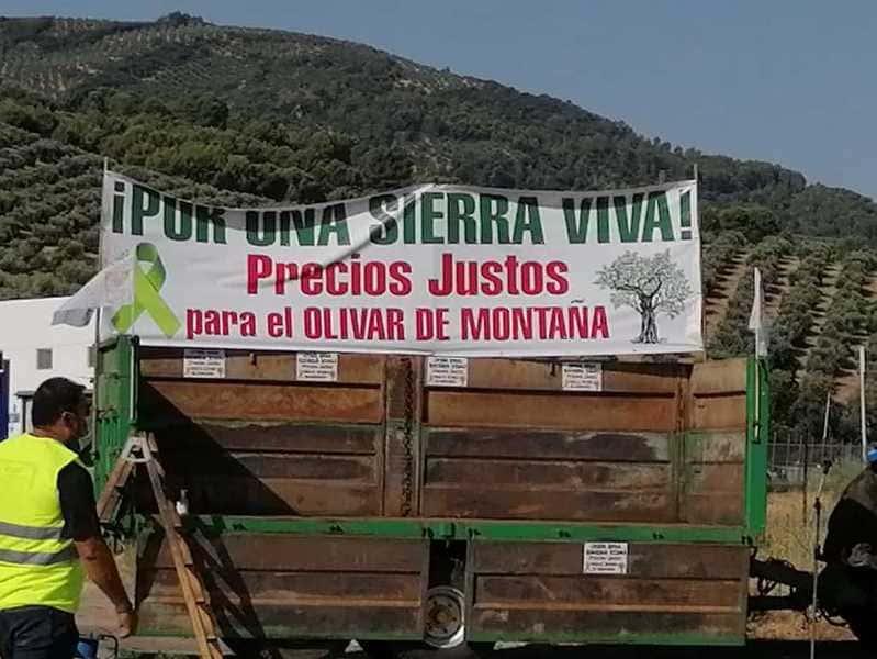 """La carreteras de la Sierra se llenan de vehículos por un olivar que se """"ahoga"""""""
