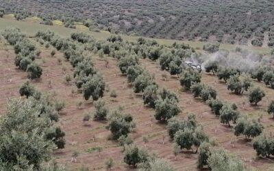 COAG Jaén pide a la CHG que cumpla su compromiso y dote de riego al olivar el próximo 1 de octubre