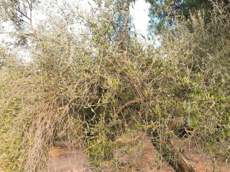 Se constituye una plataforma de afectados por herbicidas de pre emergencia