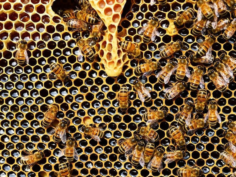 El sector apícola espera una buena campaña en Jaén