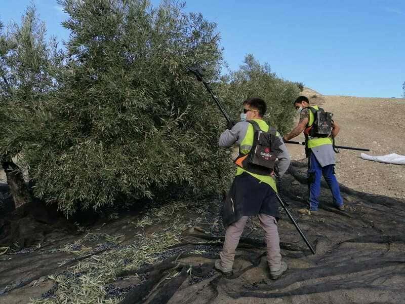 Luz verde a la convocatoria de ayudas para jóvenes agricultores de Jaén